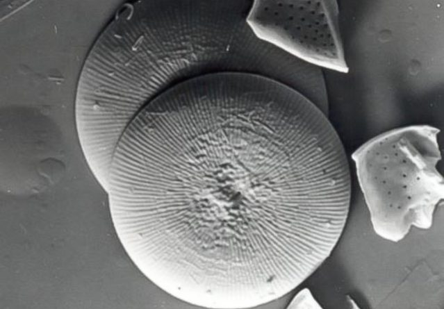 Cyclotella Fottii – Силикатна алга